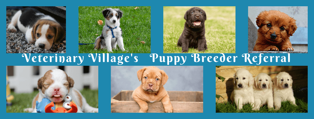 Puppy Breeder Referral