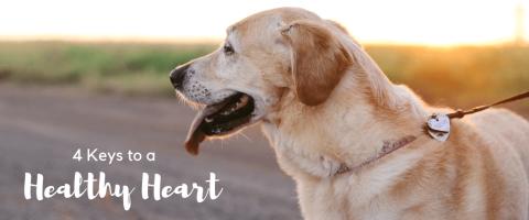 4 Keys to a Healthy Heart